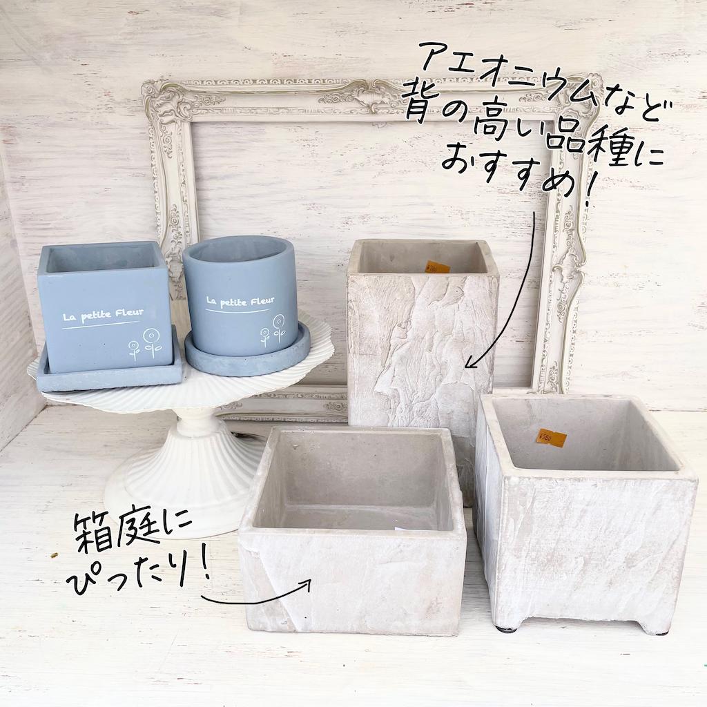 多肉植物 鉢