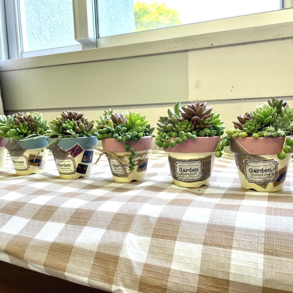 多肉植物の寄せ植え ワークショップ