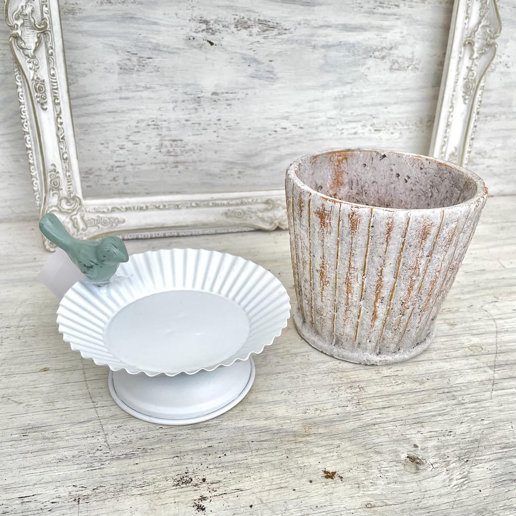 多肉植物の鉢
